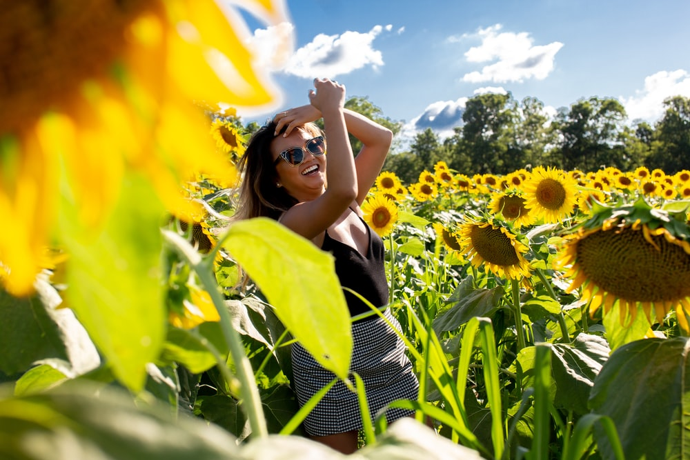 unknown person standing on yellow sunflower field