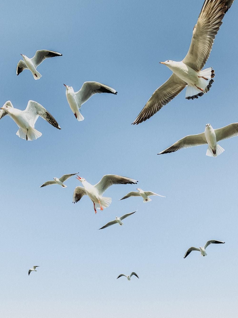 white seagulls flying across blue sky