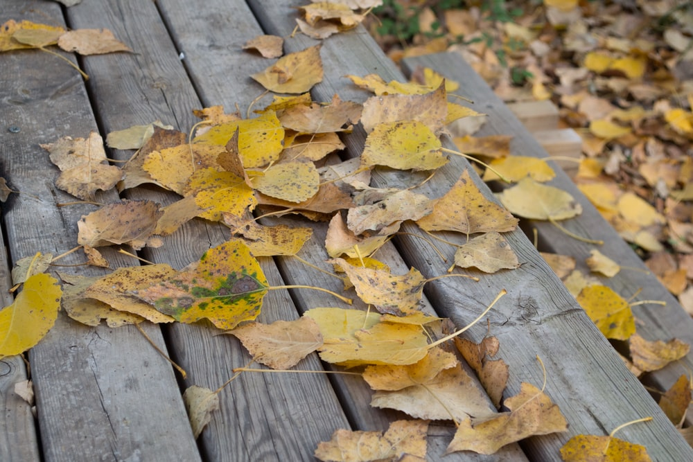 yellow and brown dried leaves