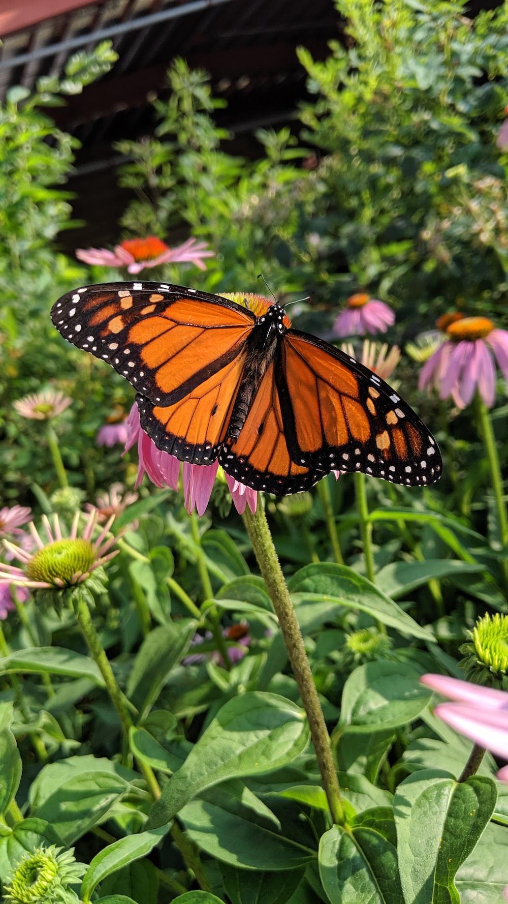 orange batterfly