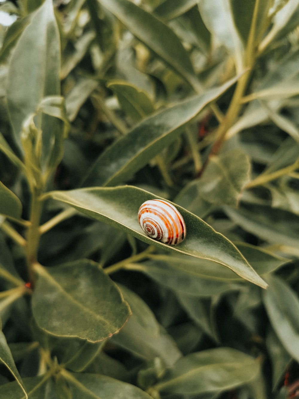 brown and white snail