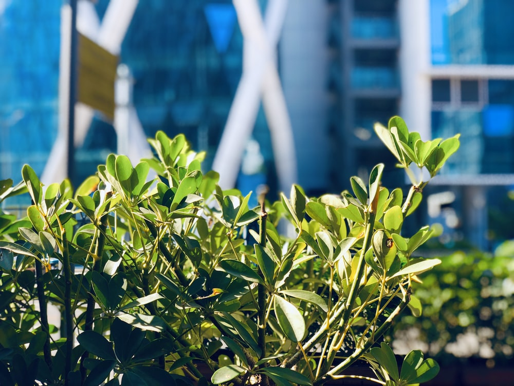 green plant near building during daytime