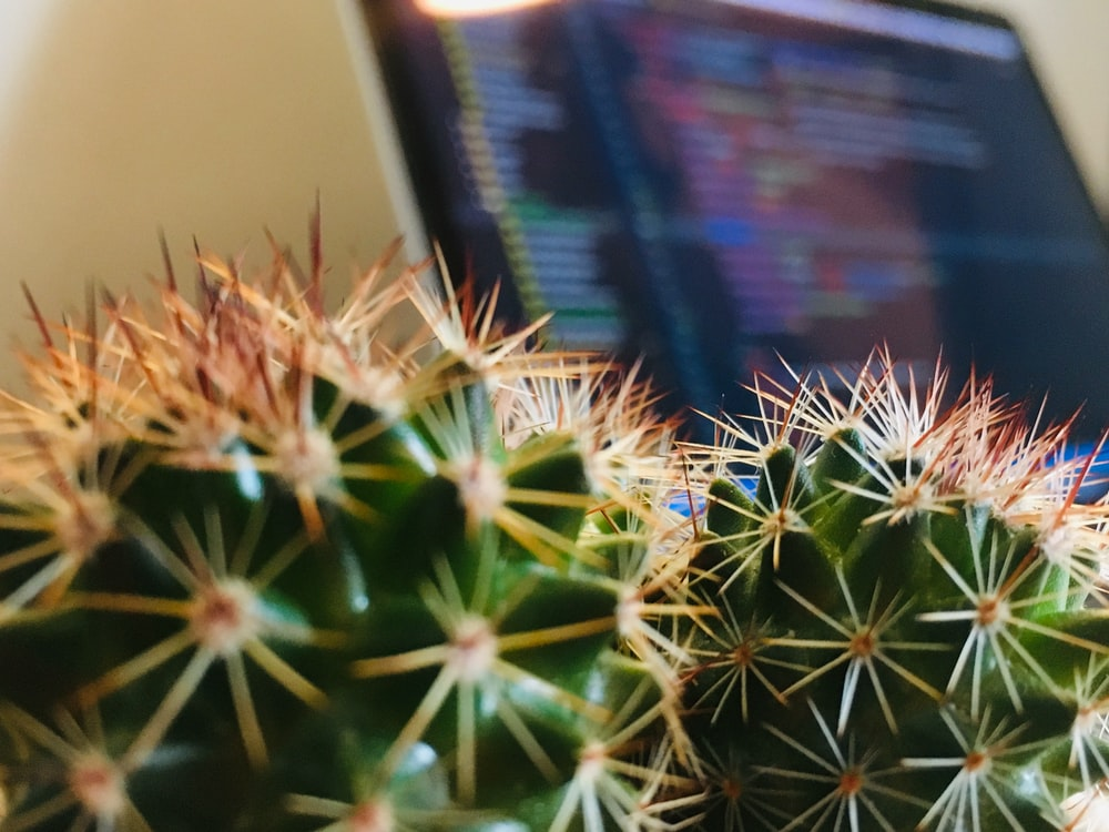 green cactus near turned-on computer monitor