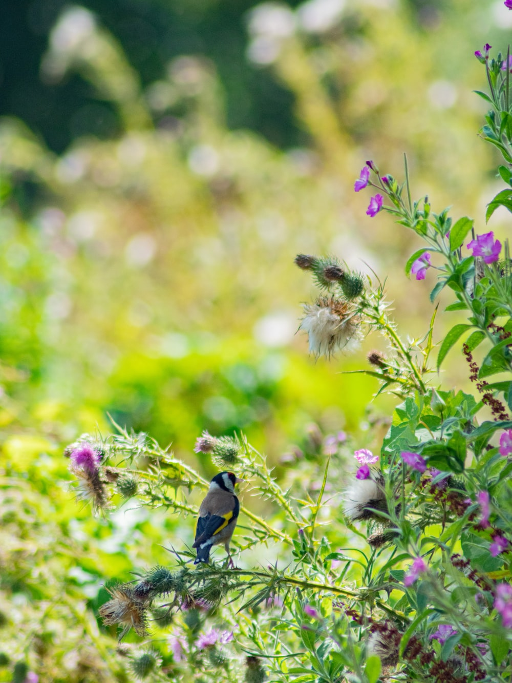 bird in a flower plant close-up photography