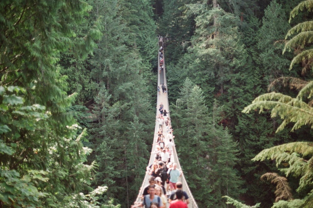 people in a bridge near trees during daytime
