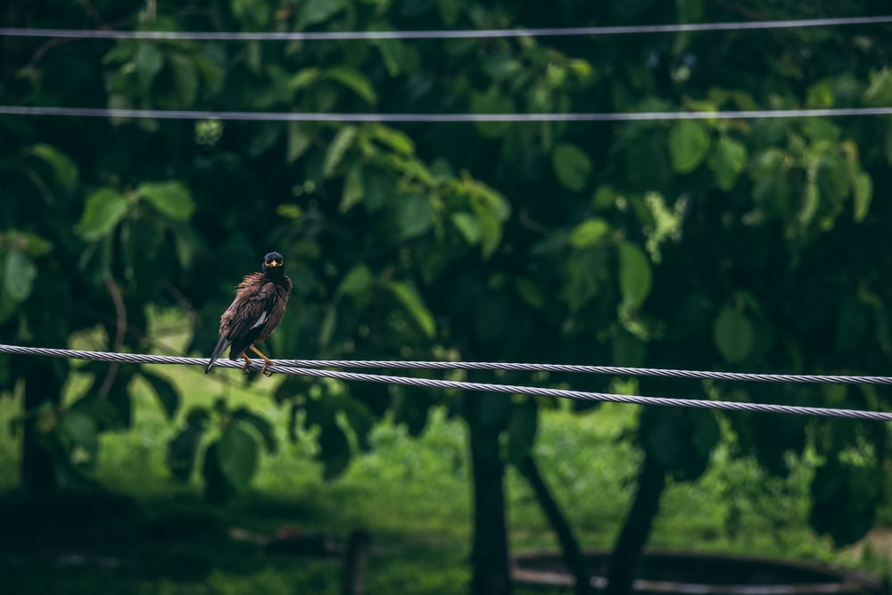 black bird on gray wire