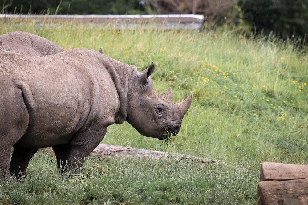 rhino near log