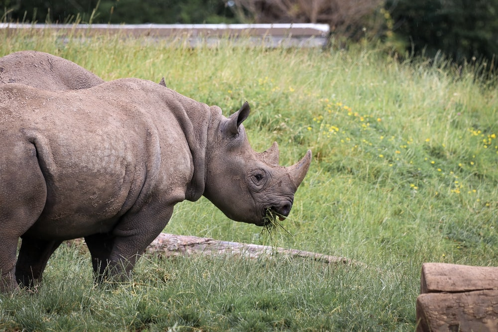 Black Rhino Pictures | Download Free Images on Unsplash