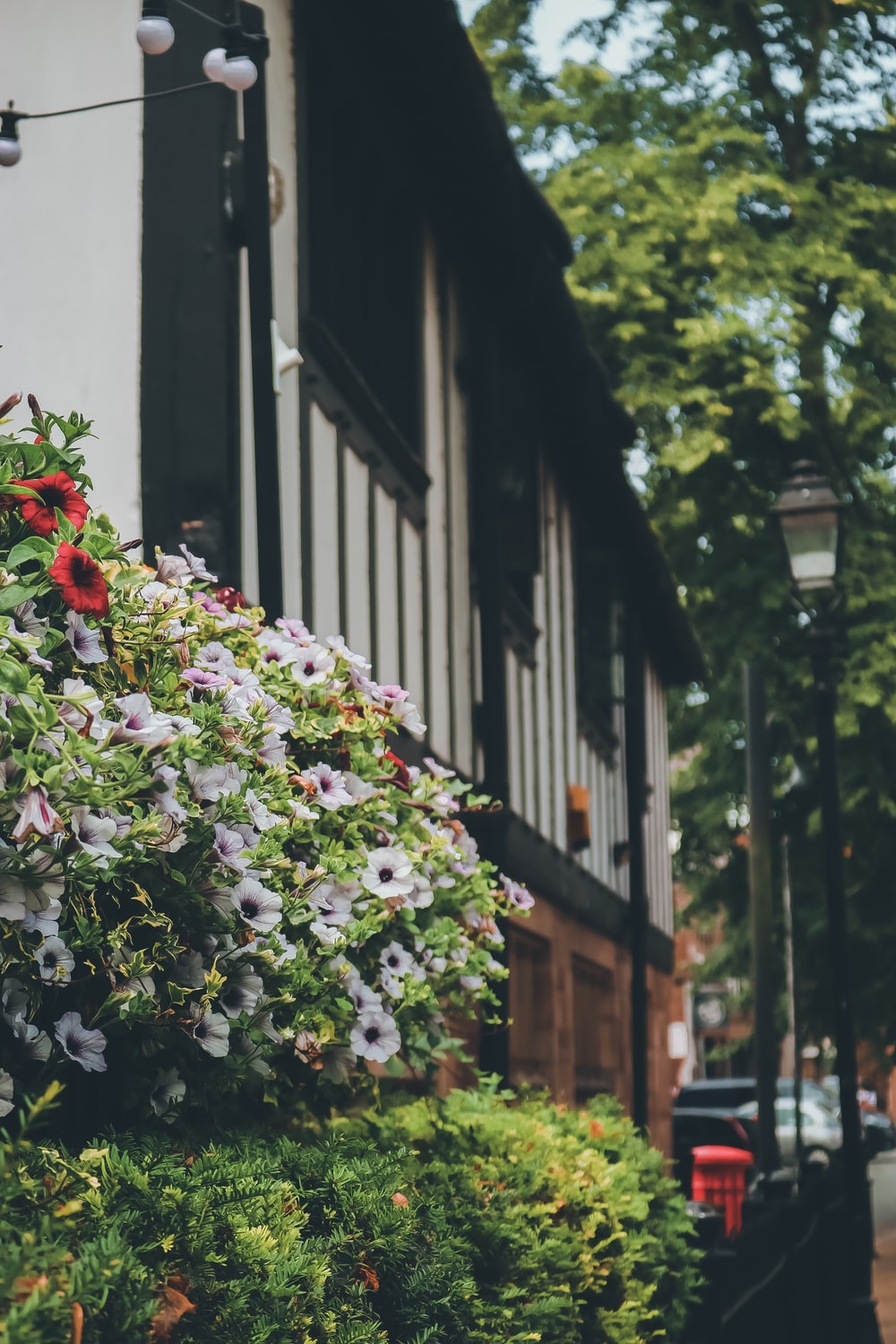 white flowers near building during daytime