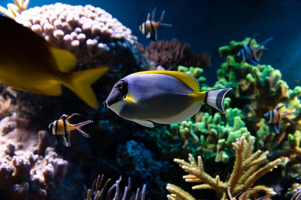 gray and yellow fish