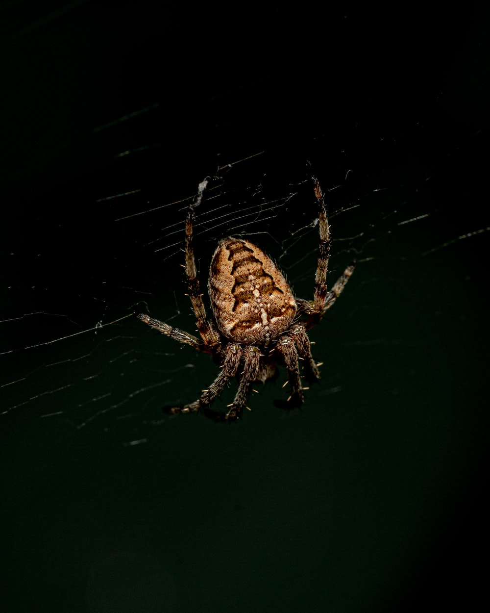 brown and black barn spider close-up photography