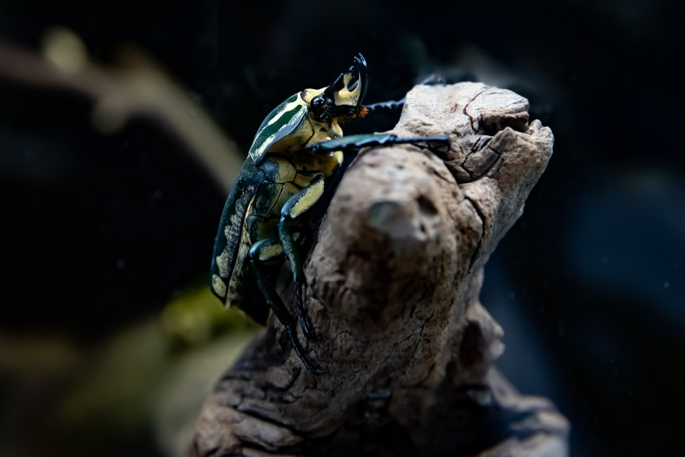 focus photography of beetle