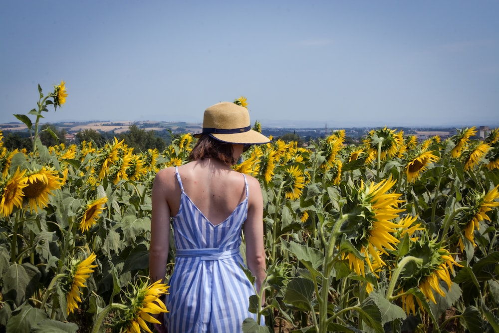unknown person standing on sunflower field