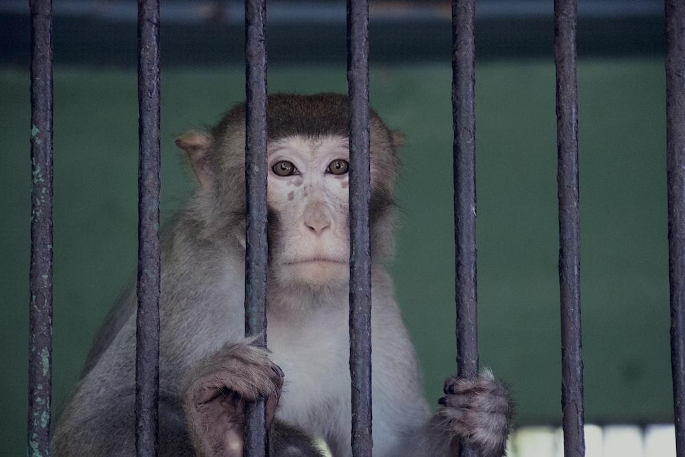 monkey on cage