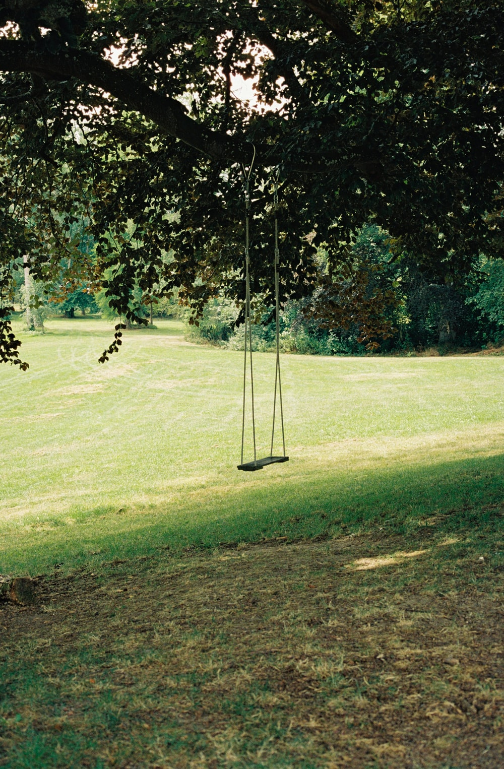 swing tied from tree branch on grass field