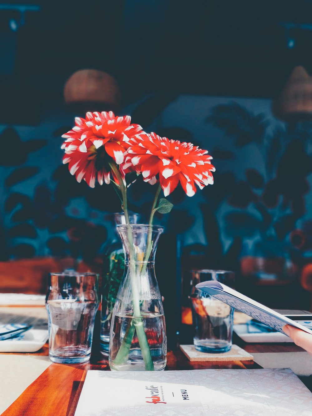 red and white chrysanthemum flowers in vase on table