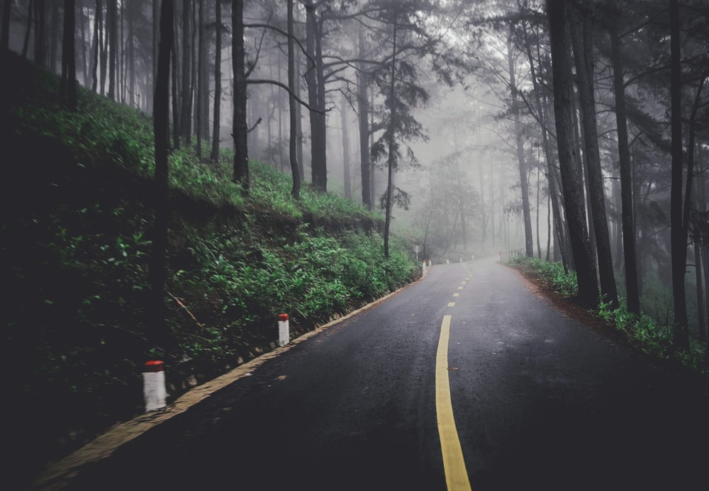 trees beside road during daytime