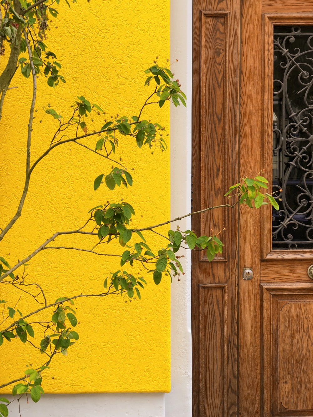 green tree beside door