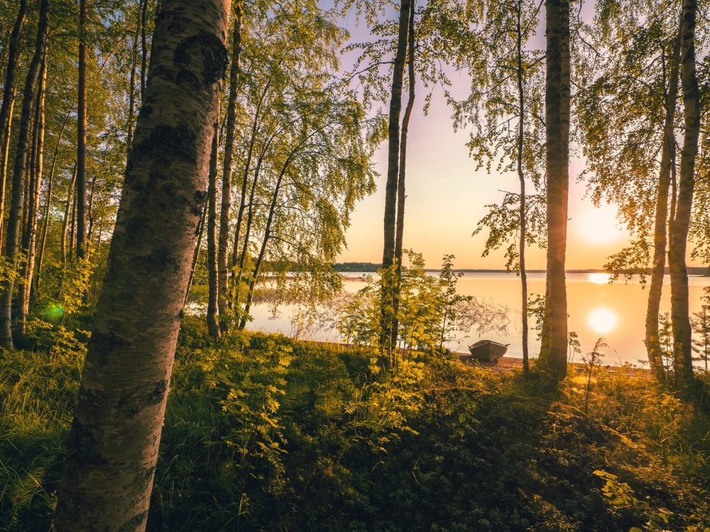 lake and trees during golden hour