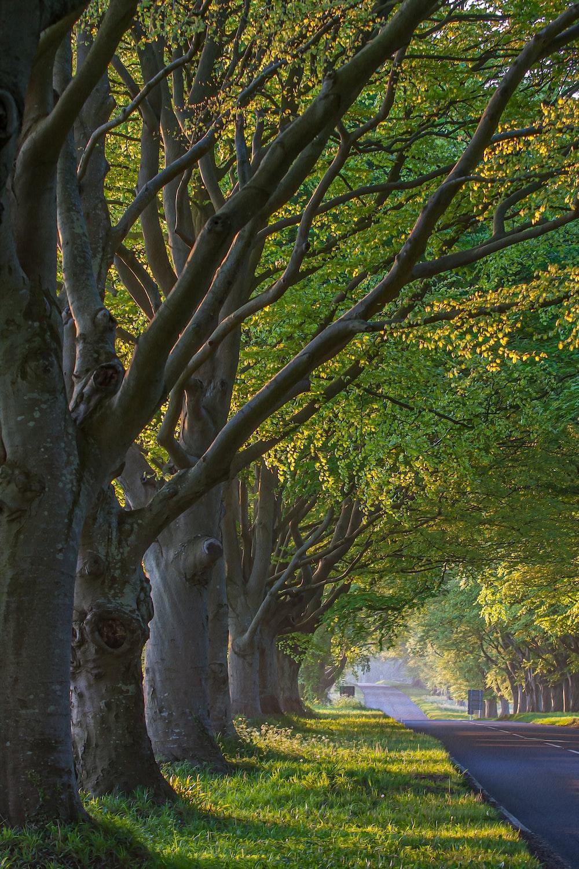 Tree Wallpapers Free HD Download [12+ HQ]   Unsplash