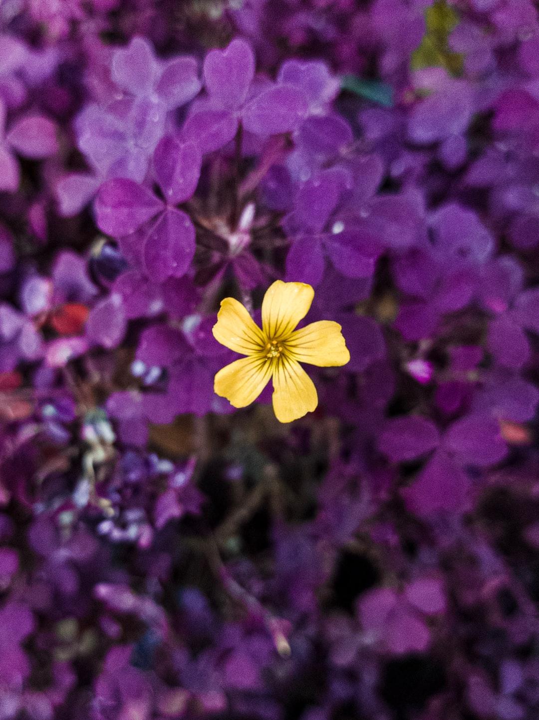 Yellow Flower - Winter Flowers #flower