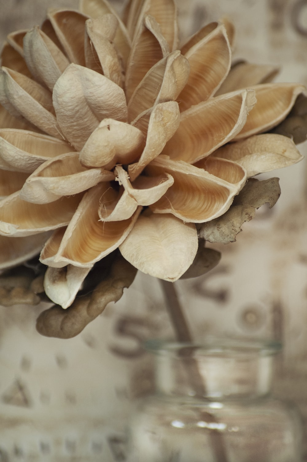 brown and white petaled flower close-up photography
