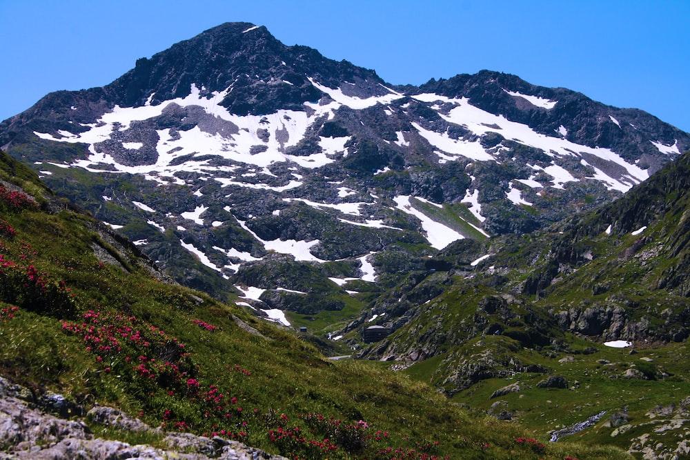 white snowcape mountain