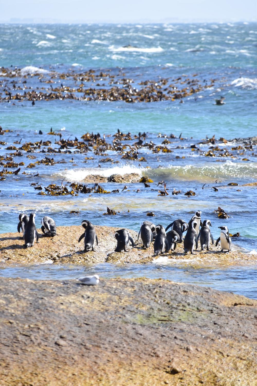 penguins near ocean during daytime