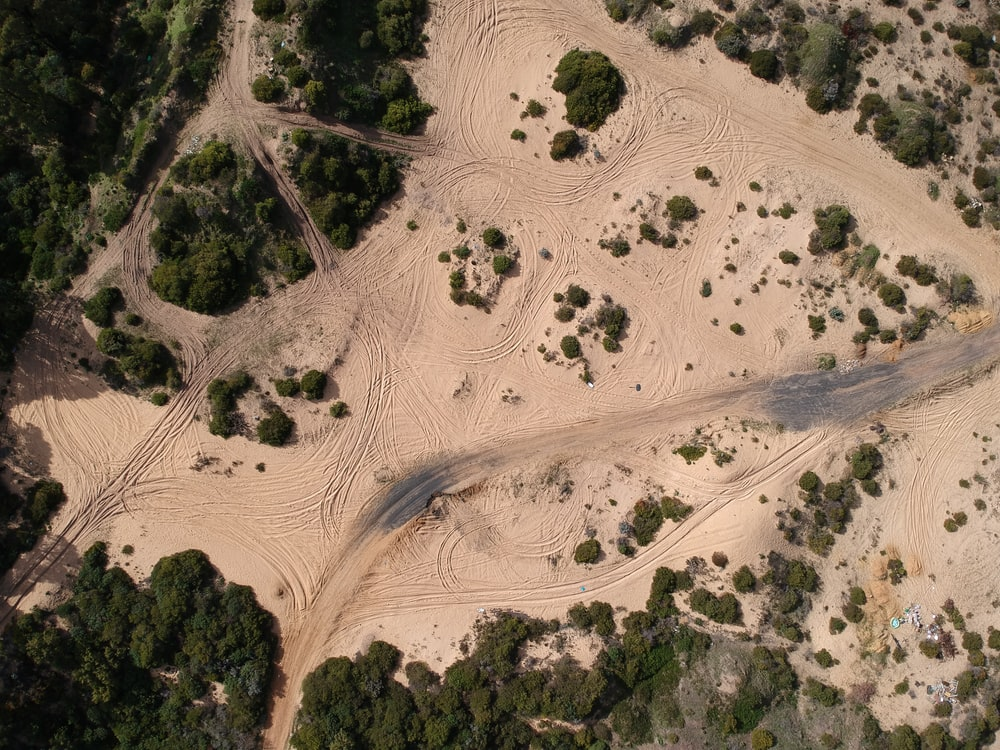 aerial view of trees on desert