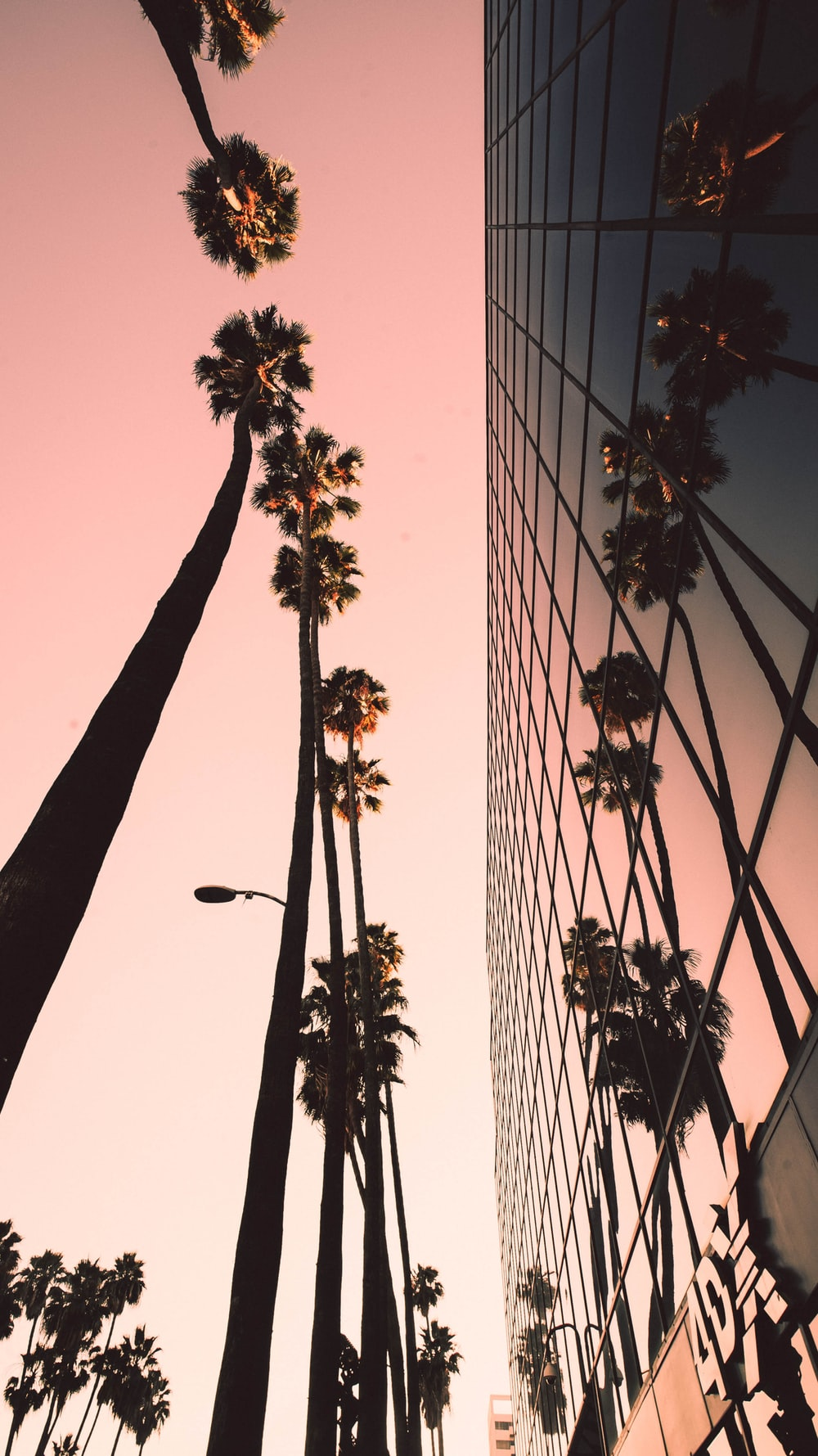 low-angle photograph of palm trees beside building