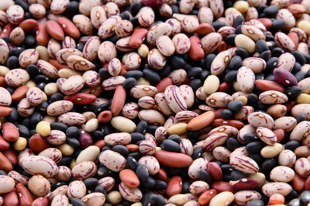 assorted-colored bean lot