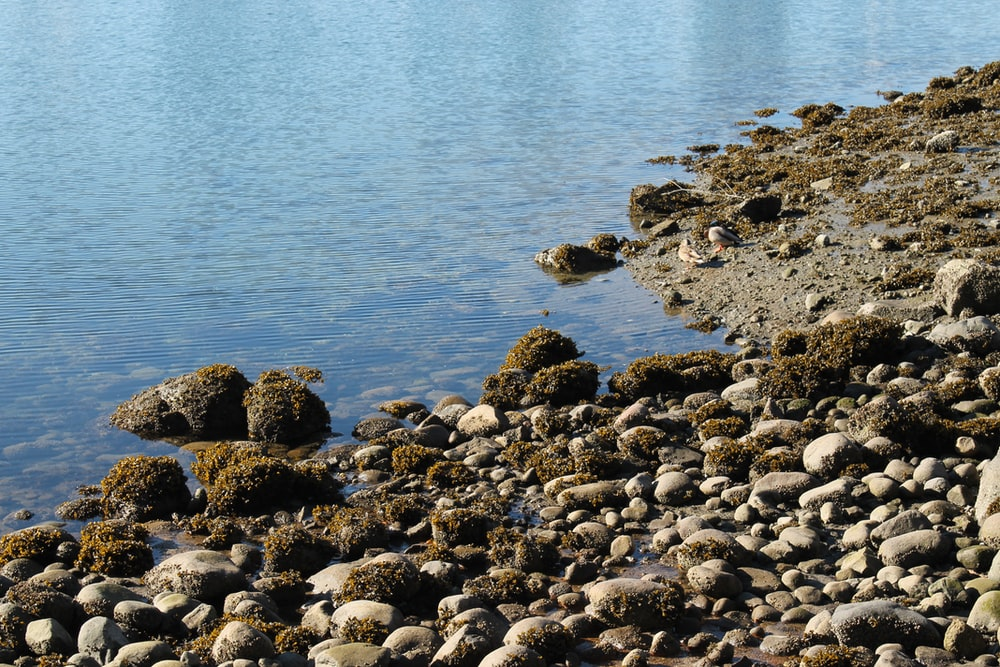 rocks beside body of water at daytime