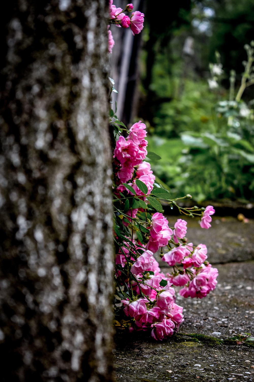 pink petaled flower plant and trees