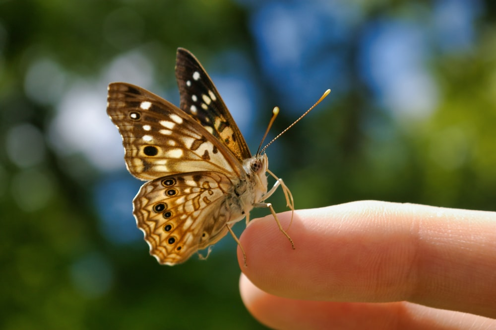 butterfly on person;s finger