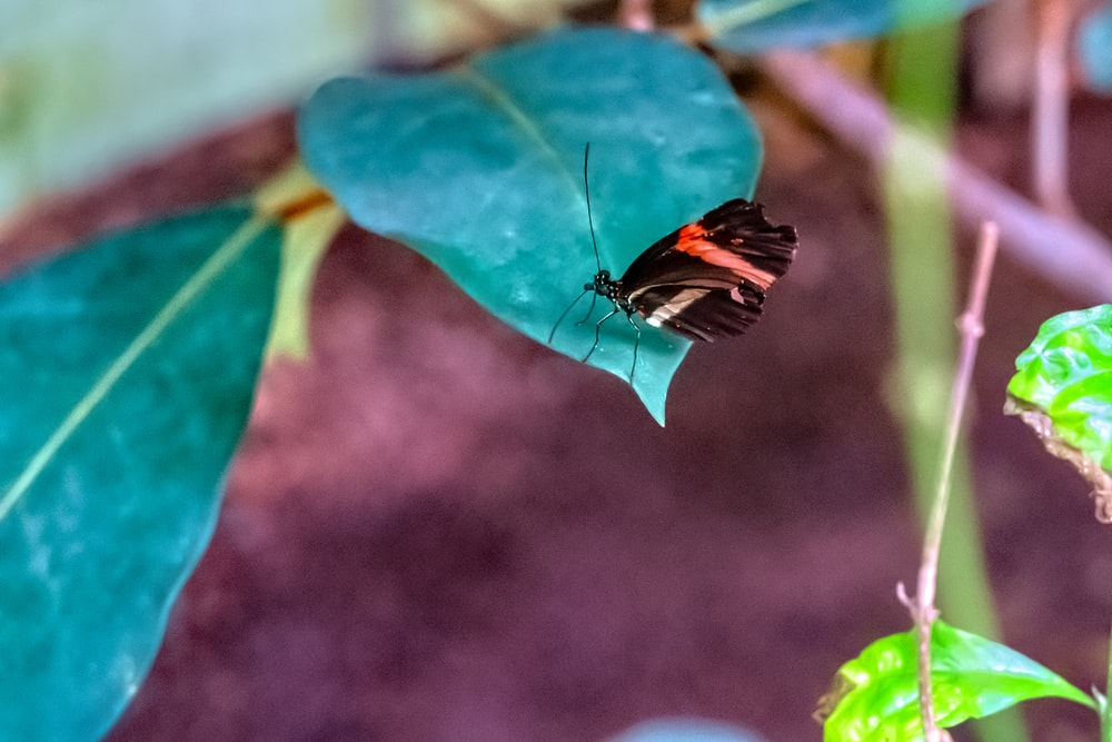 black, red, and white butterfly perching on green leaf