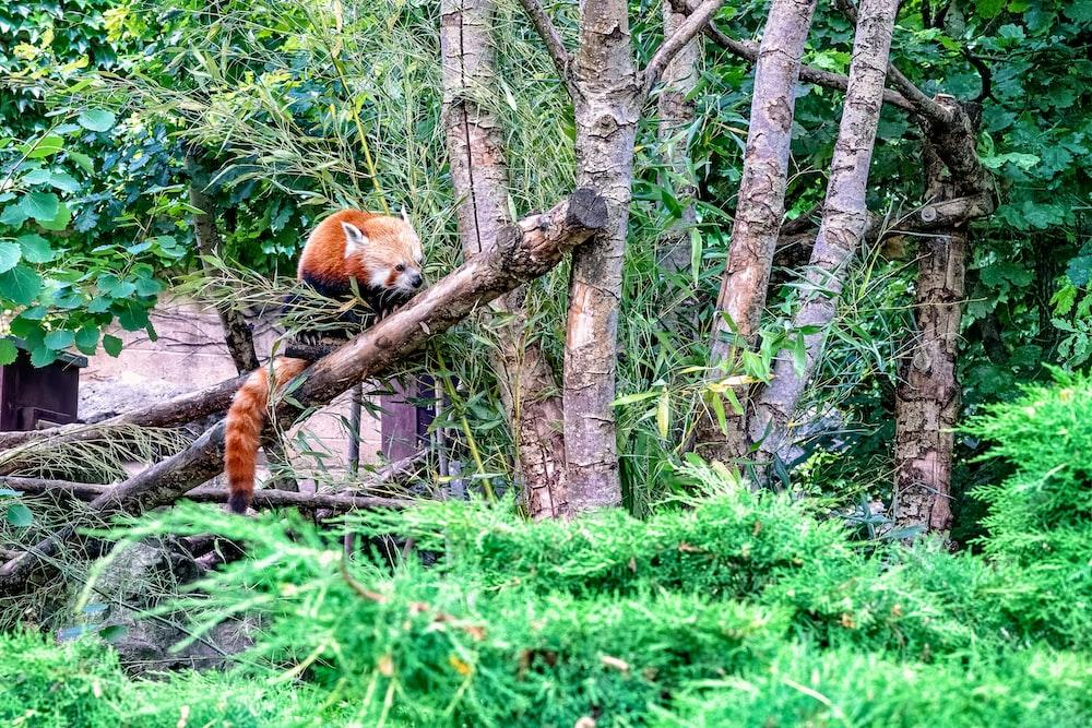 orange animal near trees