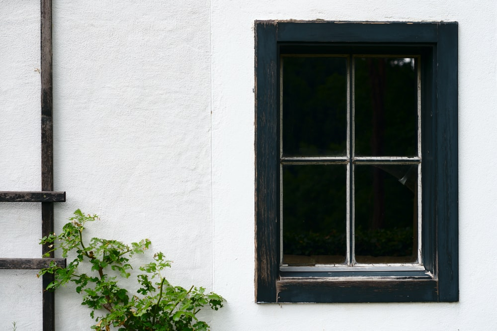 minimalist photography of green-leafed plant outside a black-framed window