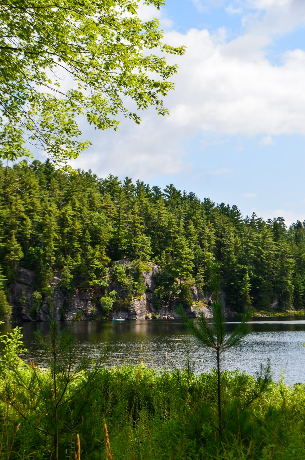 pine tree near lake