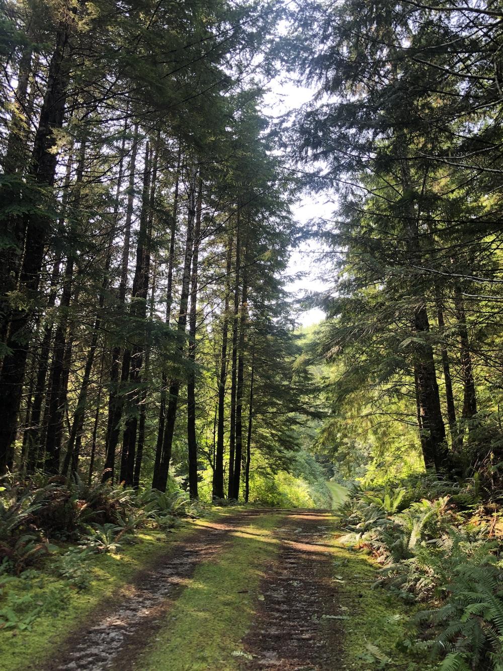 dirt road under trees