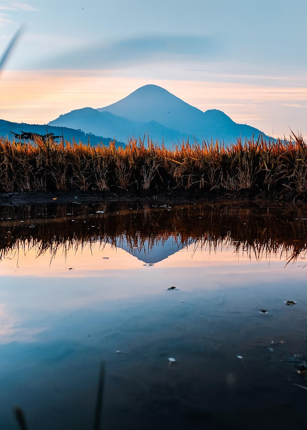 grasses bseside pond
