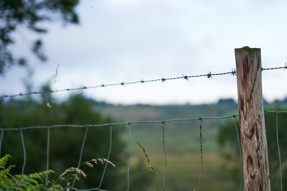 gray barb wire