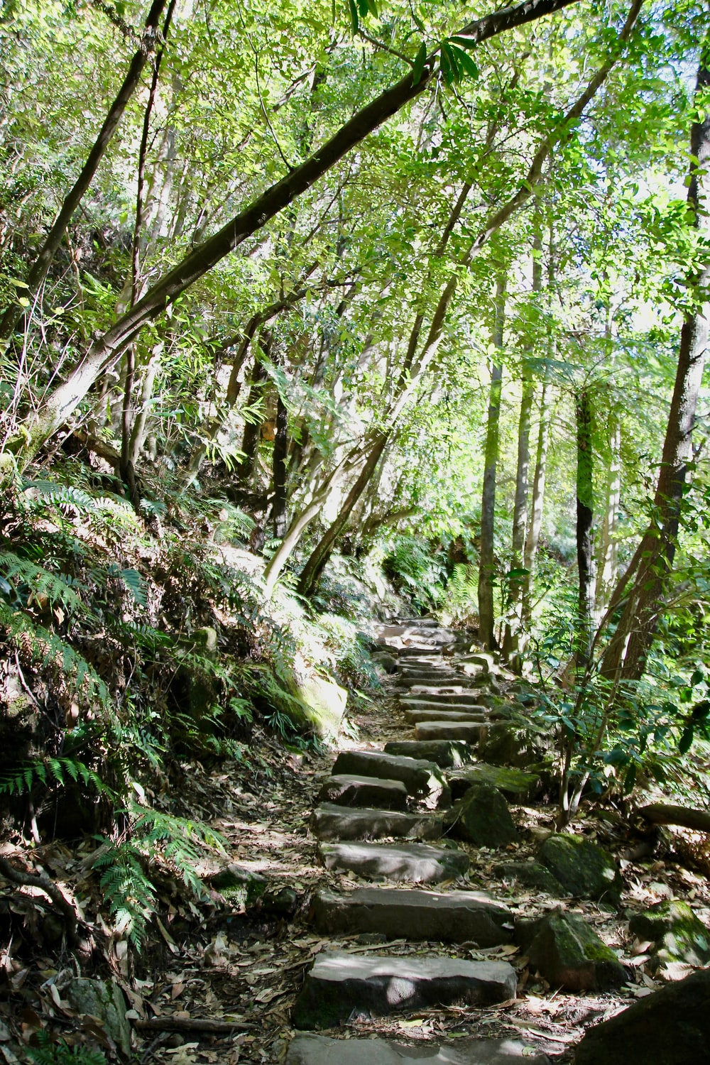 pathway inside forest