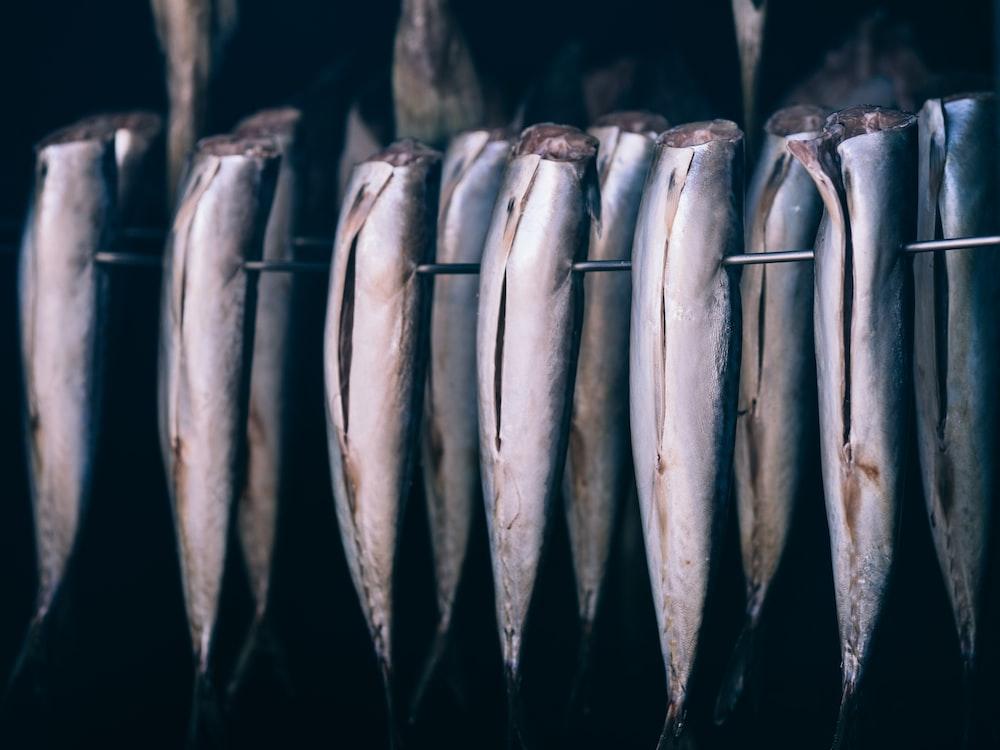 bunch of fish