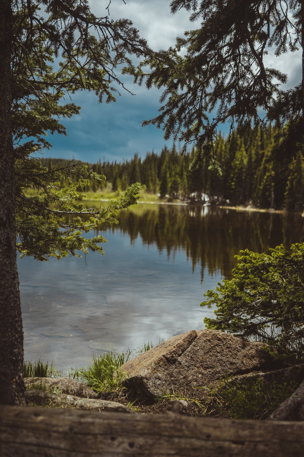 landscape photo of green-leafed pine trees beside body of water