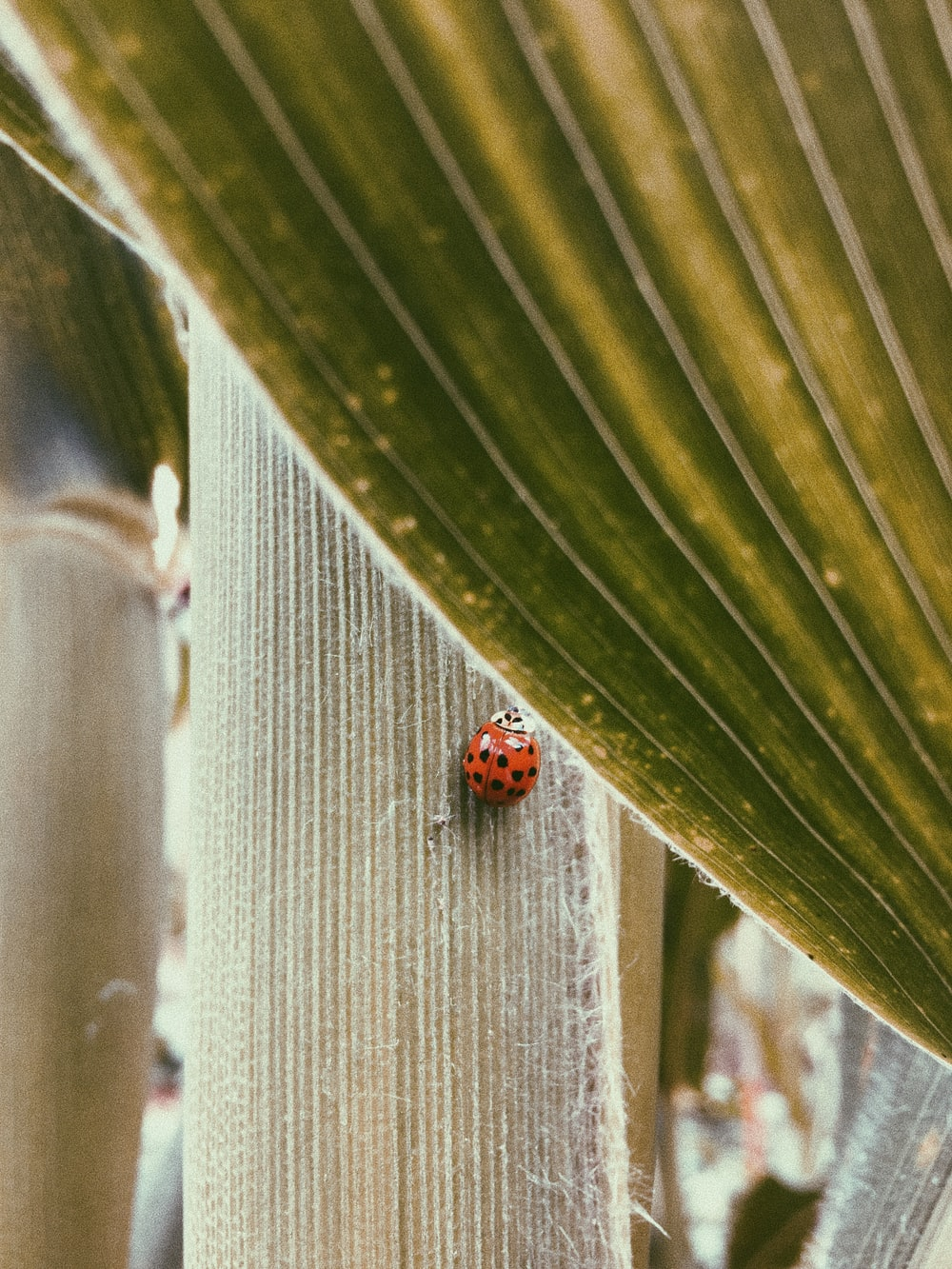 red ladybug on green plant