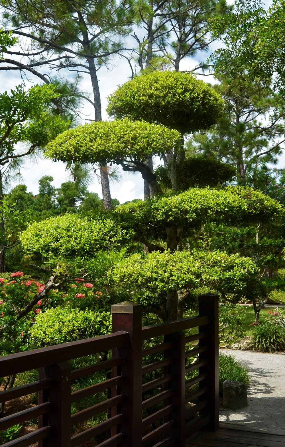 green topiary tree at daytime