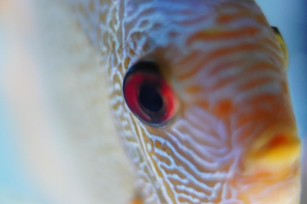 gray and brown fish