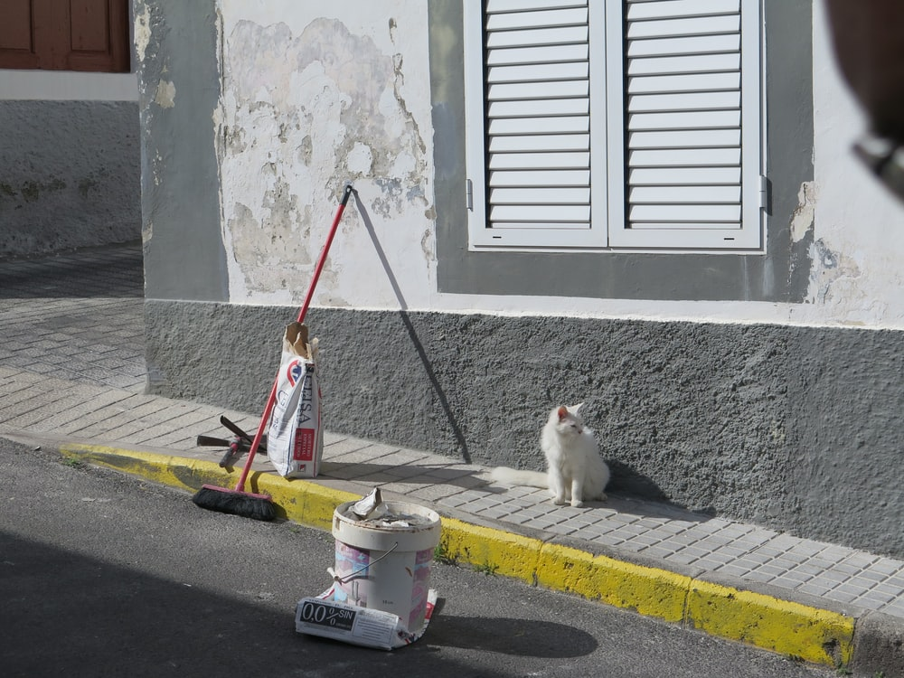 white cat near to window