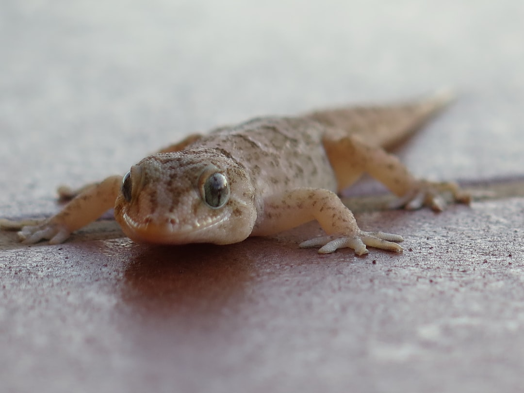 Close up of a young lizzard.