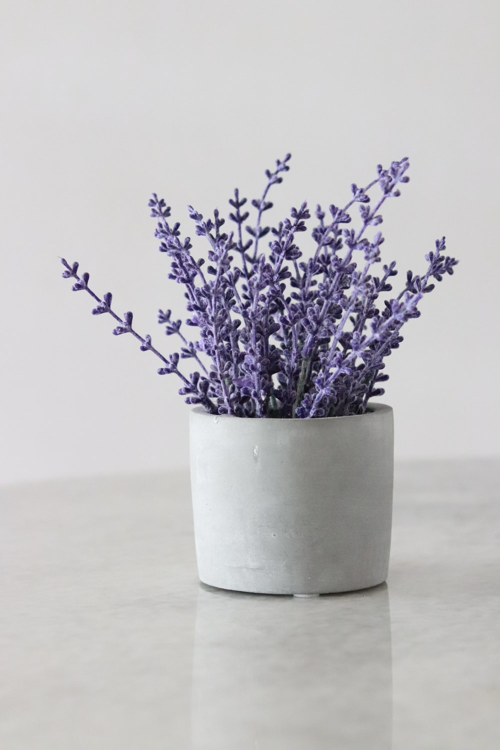 white potted purple petaled flower